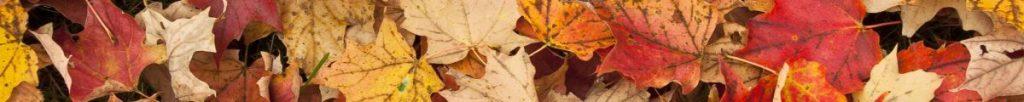 cropped-listy.jpg
